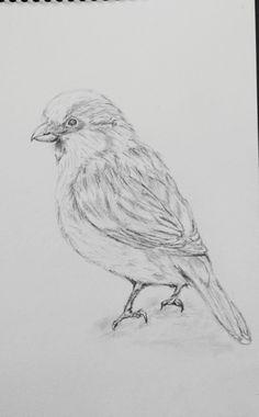 Sketch, Bird, Animals, Sketch Drawing, Animales, Animaux, Birds, Sketches, Animal