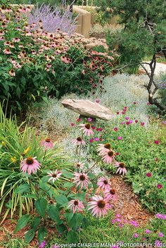 Water Wise Landscaping, Landscaping Tips, Texas Landscaping, Echeveria, Drought Tolerant Landscape, Dry Garden, Glass Garden, Permaculture Design, Xeriscaping