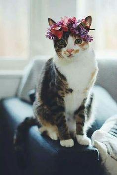 Gato con corona