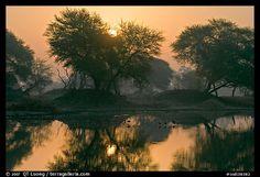 Beautiful...Pond at sunrise, Keoladeo Ghana National Park. Bharatpur, Rajasthan, India