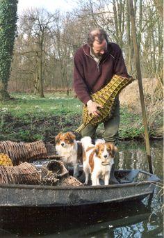 Kooikerhondjes (Dutch duck dogs)