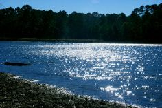 Ratcliff Lake in Davy Crockett National Forest near Crockett, TX
