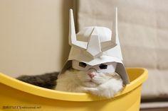 シャア猫の写真画像
