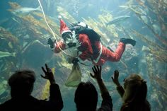 Photos of the day  December 2 2016A diver wearing a Saint...  Photos of the day  December 2 2016  A diver wearing a Saint Nicholas costume swims with the fishes in the big aquarium of the Multimar Wattforum in Toenning Germany; supporters of president-elect Adama Barrow celebrate Barrows election victory in Banjul Gambia; a lion yawns in the zoo in Frankfurt Germany; people hold posters while awaitng the arrival of the caravan carrying the ashes of Fidel Castro in Las Tunas Cuba; and…