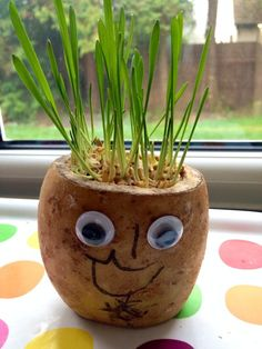 Create a funny potato head with cress or grass hair. Watch the hair grow and have fun giving your potato head a haircut. Plant Projects, Stem Projects, Projects For Kids, Crafts For Kids, Classroom Projects, Summer Activities For Kids, Creative Activities, Stem Activities, Indoor Activities