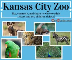 It's WowWednesday! In two weeks (May 29, 2019), we will be giving away two adult tickets and two children's tickets to the Kansas City Zoo! ❤ To be entered into this giveaway, all you have to do is click the link below and LIKE, COMMENT, and SHARE this post! Please remember, to be eligible to win you must like our page and your post must be set to public so we can see it. P.S. Don't forget to watch our live video from today (May 15, 2019) to find out how to get double entries!