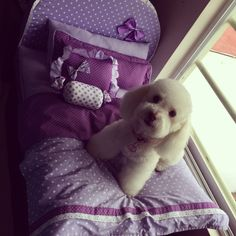 Cute Dog Beds, Cute Dogs, Guinea Pig Care, Guinea Pigs, Animals And Pets, Cute Animals, Dog Bedroom, Dog House Bed, Pet Life
