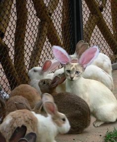 That bunny needs a haircut.
