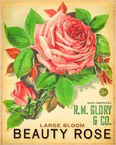 vintage seed pack ~ Beauty Rose