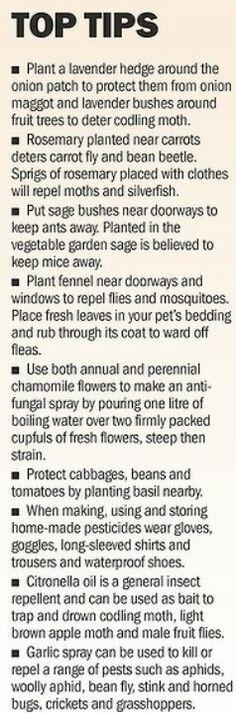 Companion planting                                                       …