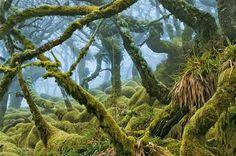 Un bosque bucólico - Inglaterra