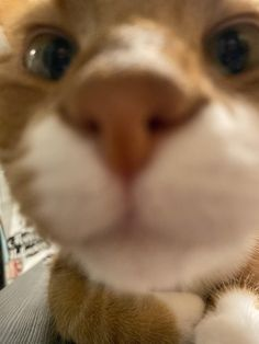 Remus is goofy Close Up Pictures, Cursed Images, Cute Cats, Kitten, Pets, Anime, Pretty Cats, Cute Kittens, Kitty