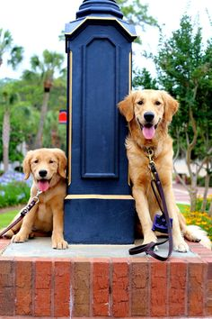 90f087ba a62c0c0acb7be1ef4dc guide dog mobility aids