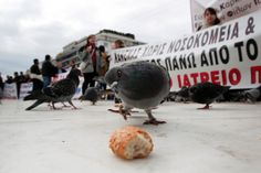 A pigeon eyes a piece of bread outside the Greek Parliament, as anti-austerity protesters hold up banners in Athens, Greece.