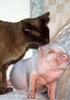 Is this pig smiling?  Even cats love pigs. LOL- ok, so the line above this is another pinners' comment- & in response, yeah, that's one happy little pig, definitely smiling :)