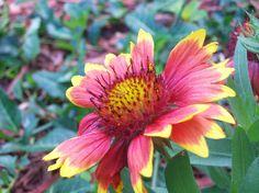 wikiHow to Dye Flowers -- via wikiHow.com