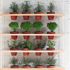 Mes plantes sur un mur