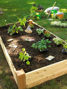 Raised veggie bed tip: keep it narrow.  No more than four feet wide makes tending and harvesting so much easier.