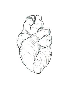 simple human heart drawing images for gt real heart tattoo drawing Real Heart Tattoos, Human Heart Tattoo, Human Heart Drawing, Heart Outline Tattoo, Human Heart Outline, Realistic Heart Tattoo, Real Tattoo, Tattoo Arm, Big Tattoo