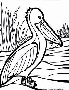 pelican coloring page