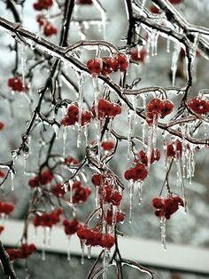 зима, рябина