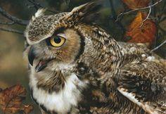 CarlBrenders - In Focus - Great Horned Owl