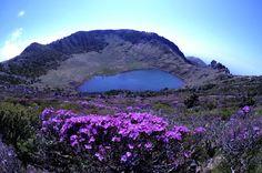 한라산 - 백록담(Mt. Hallasan)