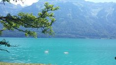 Our #weekly picnic tip this week is a hike from Ringgenberg alongside idyllic Lake Brienz.  bit.ly/22BEAIQ