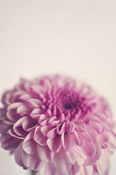 Pink Flower Photography Minimal Floral от InLightImagery на Etsy