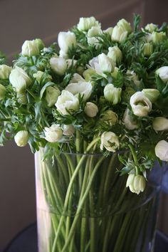 Anemone De Caen white