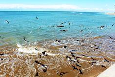 Gaviotas en la Playa de Regla Chipio