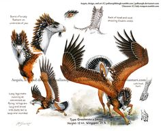 Finished custom Aequis (Grasslander x Desert type hybrid) with Harris' hawk inspired color scheme for I am quite pleased with the end result, and he was a blast to work on. (May or may not have to do with my love of rusty/mahogany. Creature Drawings, Bird Drawings, Animal Drawings, Fantasy Beasts, Fantasy Art, Harris Hawk, Fantasy Monster, Creature Concept, Mythological Creatures