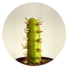 This mini cactus makes a great table decoration item for Cinco de Mayo, and can me made in a jiffy! Mini Cactus, Mexican Party Decorations, Cookout Decorations, Spanish Party, Mexico Party, Mexican Fiesta Party, Mexican Birthday, Fiestas Party, Cactus Decor