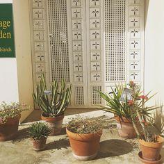 cactus & succulents.