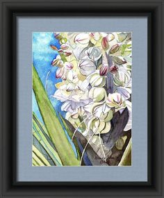 Yucca Blossoms Framed Print By Michele Ross