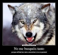 lobos enamorados con frases - Buscar con Google