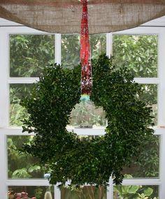a cheery boxwood wreath