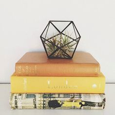 Small geometric glass terrarium