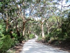 MARGARET RIVER,WESTERN AUSTRALIA_BORAUP FOREST_MAR 2013. By: Edo