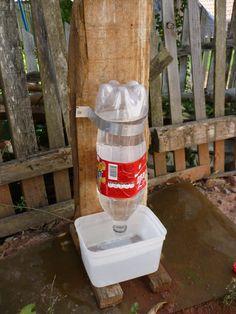 fazer dispenser de água para cães de rua - Google Search