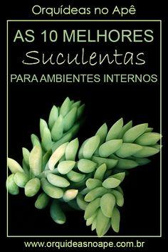 Cactus Names, Plantas Bonsai, Low Maintenance Plants, Cactus Y Suculentas, Little Plants, Planting Succulents, Botany, Hibiscus, Flora