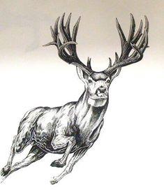 The mule deer is a deer indigenous to western North America; Here are a few mule deer tattoo ideas worth considering. Hunting Drawings, Hunting Tattoos, Bull Tattoos, Tree Tattoos, Hand Tattoos, Sleeve Tattoos, Animal Sketches Easy, Pencil Drawings Of Animals, Deer Tattoo