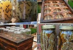 Mason Jar Bee Hives | Best Home Depot Hacks and Homesteading Tips & Tricks at http://pioneersettler.com/home-depot-hacks-homesteading-tips-tricks