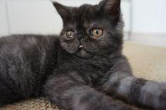 #cats #cat #holyshitcat #holy shit cat #kitten #cute