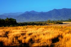 Dima at Alipurduar (Buxa Tiger Reserve) Dooars - #Dooars #Alipurduar #Kalchini