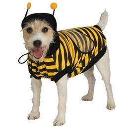 Bumble Bee Dog Costume from Costume Craze.   Pet Costumes - Bumble Bee dog costume - Your pet will be buzzing with excitement to wear this adorable Bumble Bee Dog Costume! Includes yellow and black hooded jumpsuit with wings and headpiece.  Get your rebate from RebateGiant.