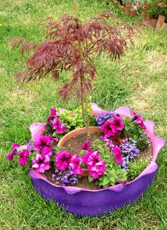 Jay surprised me with a red Japanese Maple Tree. He made a planter out of an old tire. Lets see if I can keep it alive! Murphyfrog Susan's garden tire planter