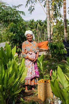 Harvest in Lubuk Beringin village Indonesia