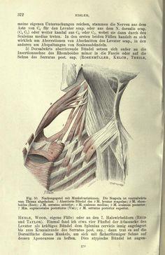 Handbuch der Anatomie des Menschen