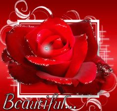 Tips healthy, weight loss, bigger butt, and nutrition please visit : fuzedrinkhealthy. Butterfly Flowers, My Flower, Red Flowers, Beautiful Pictures With Quotes, Rose Pictures, Beautiful Red Roses, Beautiful Gif, Beautiful Friend, Abstract Backgrounds